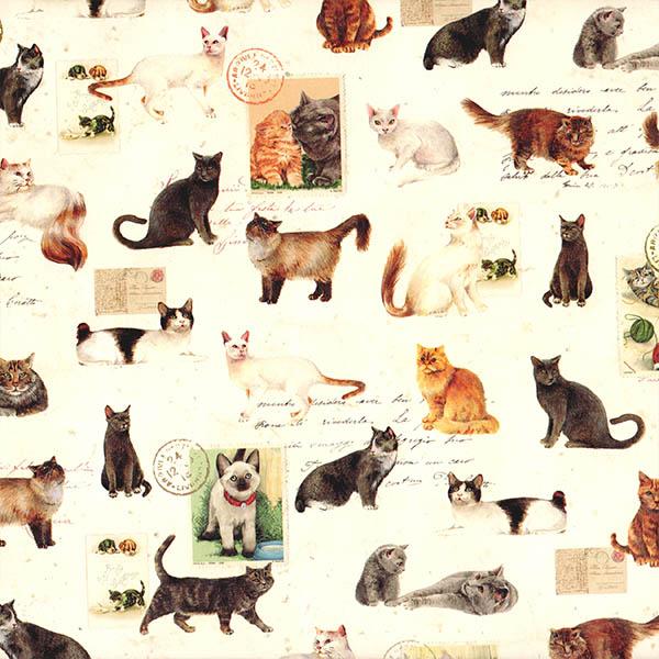 15.Mascotas-gatos