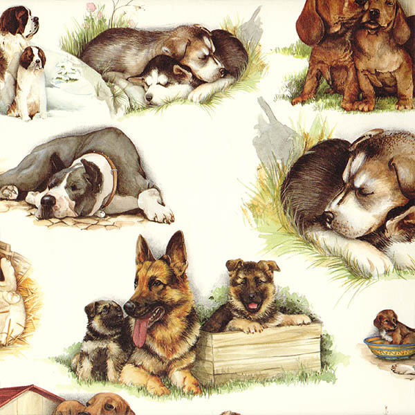 16.Mascotas-perros